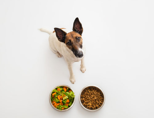 Dog Nutrition Tips